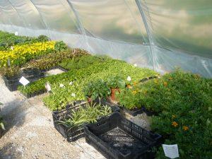 plantations dans la serre municipale à Dormans