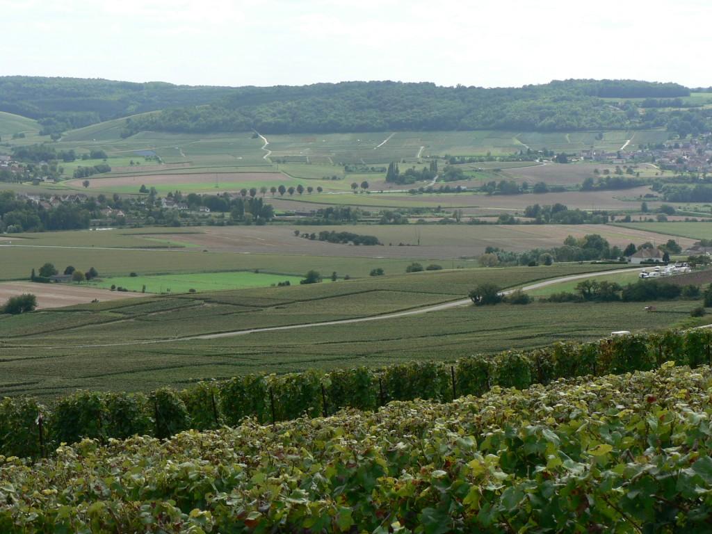 Le vignoble champenois à Dormans entre les hameaux de Chavenay et Soilly