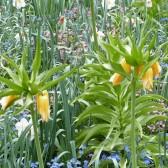 Fleurissement 2012, gros plan d'un massif