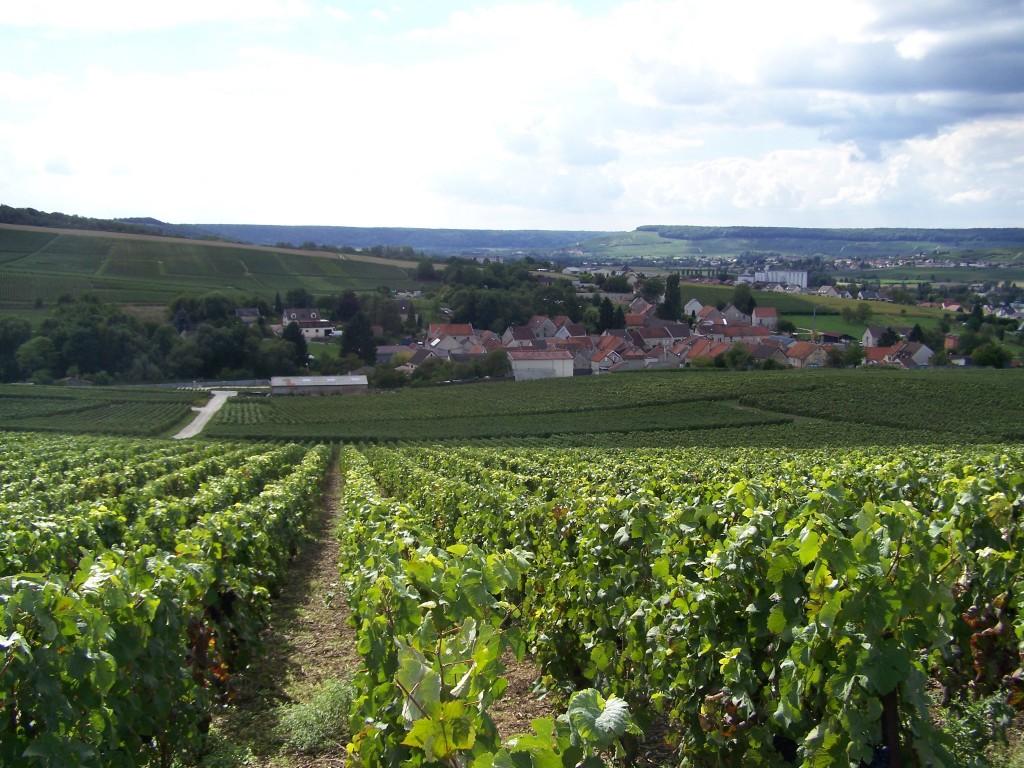 Le vignoble de Dormans à Vassieux