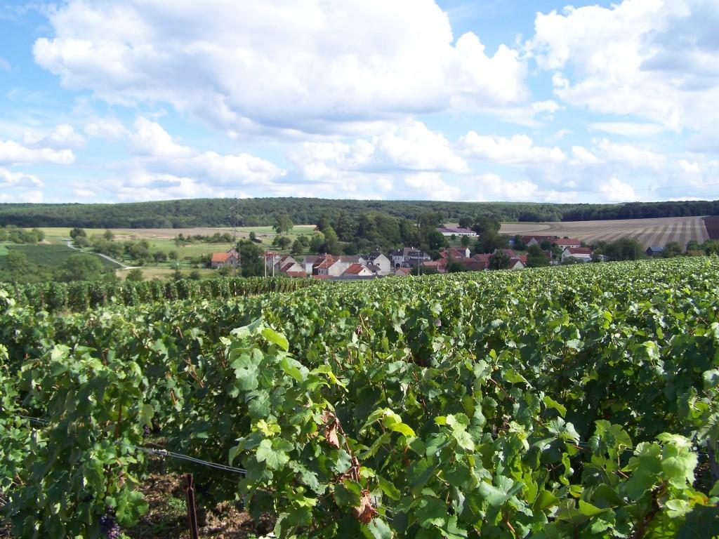 Le vignoble de Dormans à Vassy